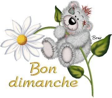 marguerite-teddy-bon-dimanche-flora