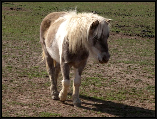 - Activité n°3: Le plus beau cheval. Pie-0-1a3bef1