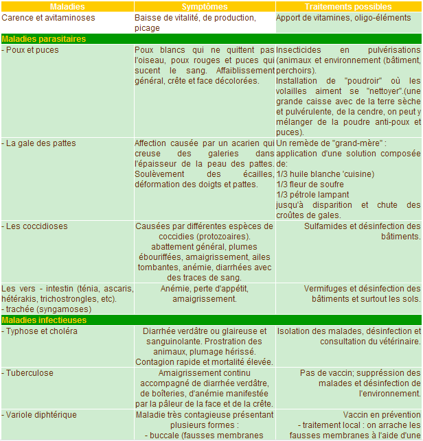 Les symptomes des maladies de nos volailles for Les maladies des volailles