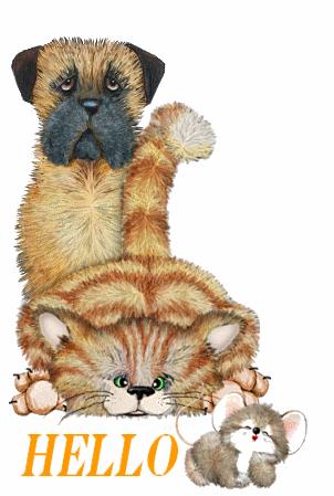 hello-chat-chien-souris-flora